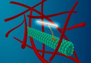 Hitchhiking carbon nanotube
