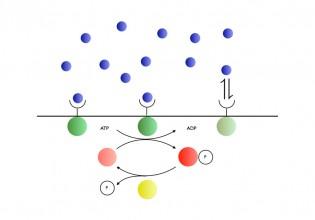 Tijd, energie en opslagcapaciteit bepalen meetnauwkeurigheid van de 'celcomputer' volgens AMOLF