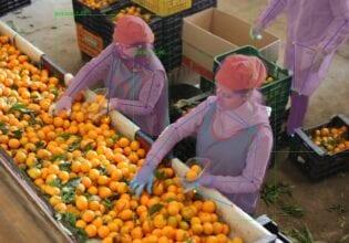 WUR AgroFood robotics